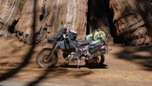 RTW ready DR650SE in front of Sequoia Tree