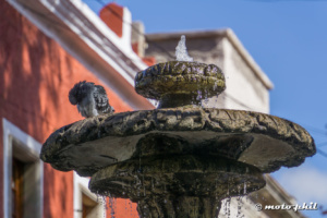 Top of a fountain with a pigeon taking a bath
