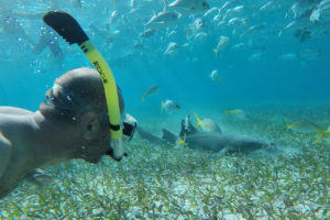 Snorkeling with the sharks